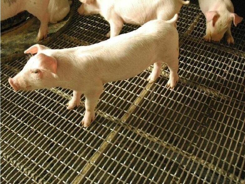 养猪轧花网 铁丝编织网